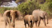 Екзотично сафари в Танзания и почивка на Занзибар